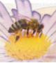 פרויקט גמר העוסק בקריסת כוורות דבורים